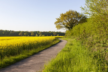 Von Kellenhusen nach Dahme-Fahrradweg durch Rapsfelder