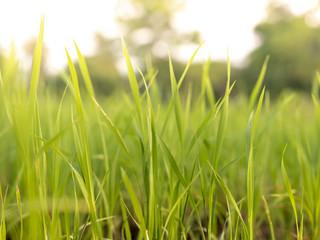 Blur of grass