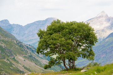 Tree with a mountain landscape in the background.