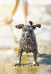 chien mouillé sur la plage