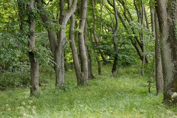 Park area in Kolobrzeg