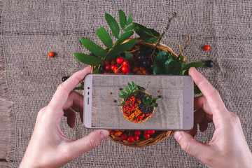 woman makes a photo of a basket with a rowanberry