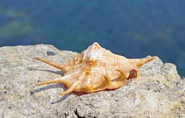 Seashell on the stone