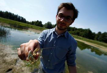 Stephan of the Karlsruhe University of Education holds calico crayfish (Orconectes immunis) in Rheinstetten