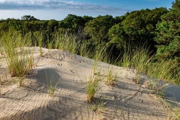 Animal tracks on an ancient dune at Jockey's Ridge State Park, NC