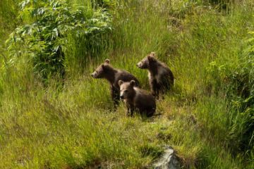 Triplet Kodiak Bears