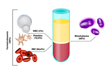 Blood Composition. Infographics