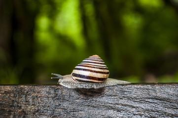 Animali e natura: primo piano di una lumaca su un tronco in una foresta