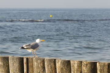 There is lonely seagull on a breakwater