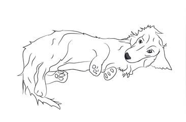 dog lies, dachshund, lines, vector,