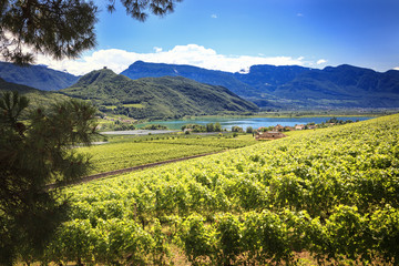 Near the cities of Caldaro (Kaltern) and Termeno (Tramin) lies the warmest lake all over the European Alps, Lake Caldaro (Kalterer See).