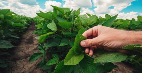 Managing soybean plant health