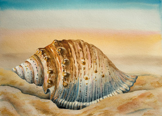 Watercolor background, a coast and a seashell