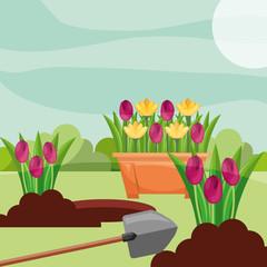 potted tulips planting flowers shovel gardening vector illustration