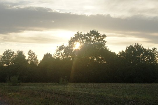 Sonne am unter gehen,abendrot, landschaft, himmel, nebel, natur, sonnenaufgang, baum, cloud, sonne, feld, wald, morgen, herbst, winter, gras, sommer, licht, dark, green, blau, bielefeld,
