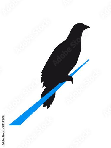 Seil Rabe Sitzend Silhouette Umriss Schatten Adler Falke Taube Vogel