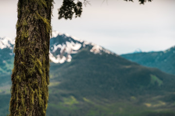 Mossy tree bark with mountains in background