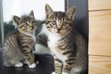Two small striped kittens sit on the windowsill. Window of the house in the yard.