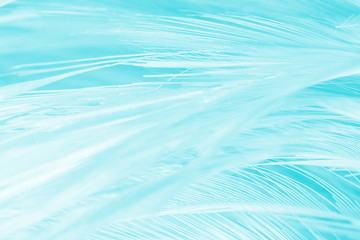 feather color turquoise emerald green background