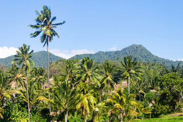 Jungle trekking in Asia and tropical vacation destinations.
