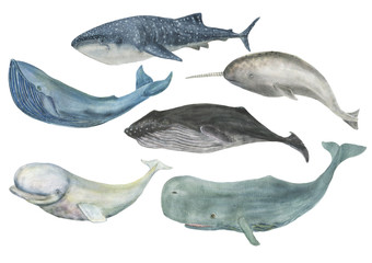 Watercolor painting whales isolated on white
