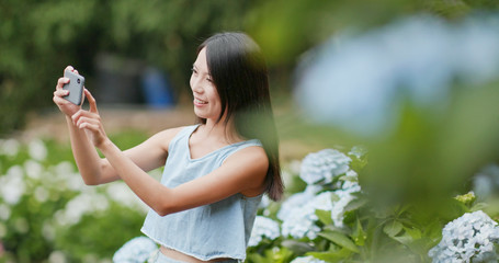 Woman taking photo on Hydrangea flower garden