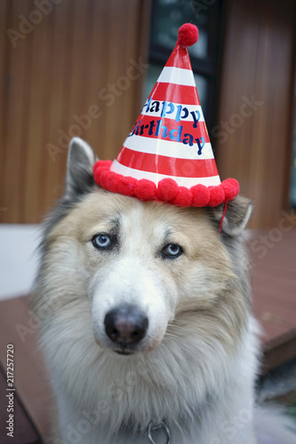 Beautiful Dog Wearing Red And White Stripe Happy Birthday Party Hat
