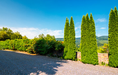 cypresses trees by the wall in pawed yard. beautiful summer countryside in mountains. wonderful sunny weather