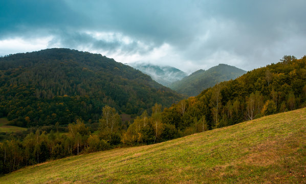 forest on the grassy hillside. moody autumn landscape in mountain. cloudy and foggy morning. trendy turquoise color toning