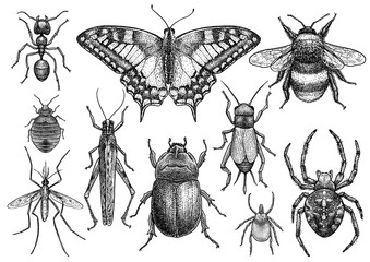 Insect collection illustration, drawing, engraving, ink, line art, vector