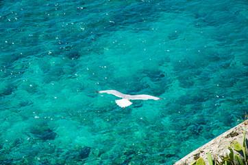 Gabbiano in volo sul mare