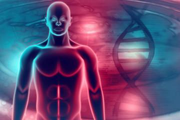 Human anatomy of man on scientific background