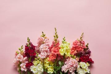 beautiful fresh blooming decorative gladioli flowers on pink background