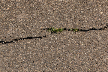 Cracks on the asphalt with growing grass
