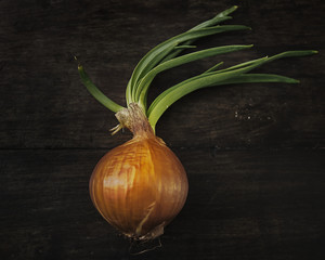Closeup a fresh onion isolated on background