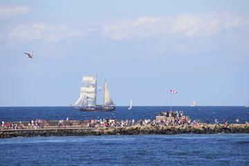 Hanse Sail, Rostock, Ostsee, Tallship, People, Seagull