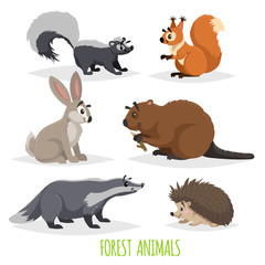 Cartoon forest animals set. Skunk, hedgehog, hare, squirrel, badger and beaver. Funny comic creature collection. Vector educational illstrations.