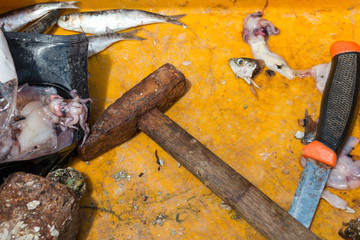 Still life of a fishing trip. Rusty hammer. A knife. Squid. Fish heads.