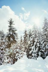 Verschneite Winterlandschaft in den Bergen, schneebedeckte Bäume