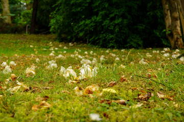 Green-yellow grass