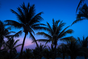 Silhouetted Palms at Dusk