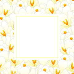 White Crocus Flower Banner Card