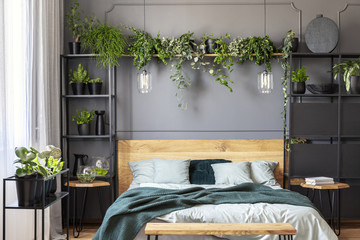 Plants and lamps above wooden bed with green blanket in grey bedroom interior. Real photo