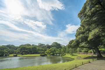 Big pine trees around a pond with a wooden bridge on a islet under the blue sky full of clouds in the garden of Rikugien in Tokyo in Japan.