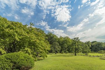 Stone lantern under a large maple tree under a blue sky in the garden of Rikugien in Tokyo in Japan.