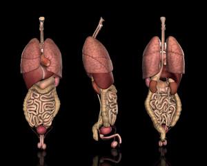内臓システム方位別一覧(男性)