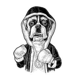 Dog boxer dressed in human in robe, gloves. Vintage black engraving