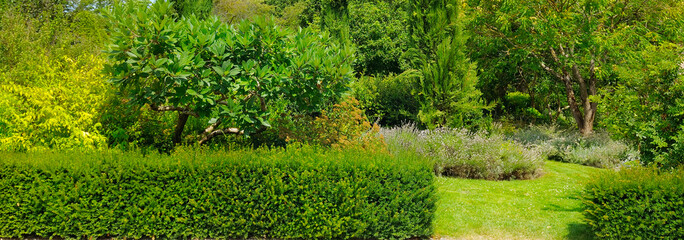 Trees, a hedge and a lawn in a summer park. Wide photo.