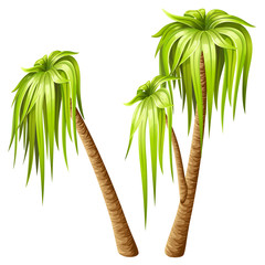 Palm trees isolated on white background. Elements location for computer games. Vector illustration.