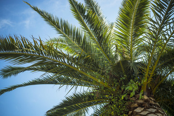 Palm trees leaves against the blue sky